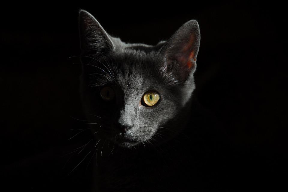 Top 4 pour prendre son chat en photo